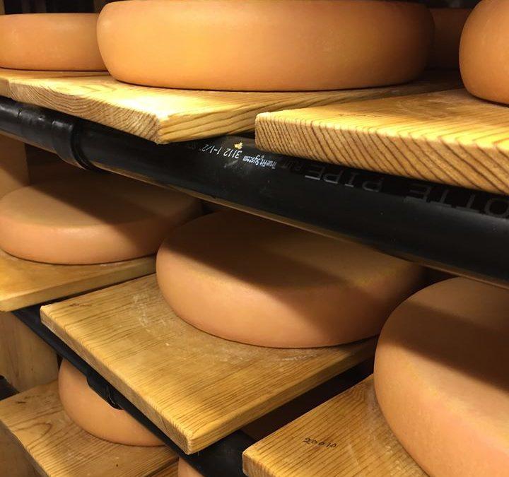 Cheese Aging Class w/ Prof. Rosenberg of UC Davis